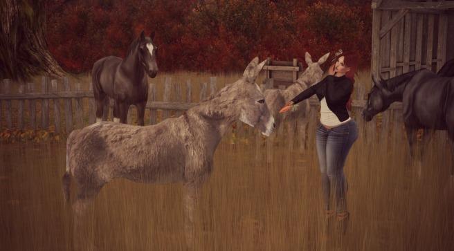training-the-donkey